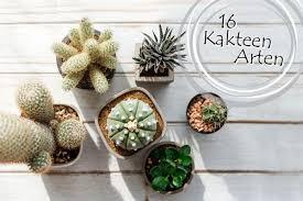 kaktusarten 16 schöne kakteenarten mit namen und bild