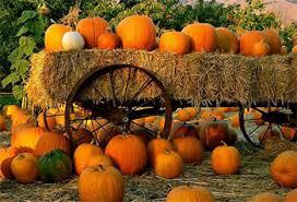 Sarasota Pumpkin Festival by Patch Work U2013 The Area U0027s Top Pumpkin Patches And Festivals Michael