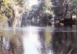 Sinkholes Alachua County Fl by Florida Springs Interactive Map