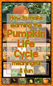 Stages Of Pumpkin Plants by How To Make The Pumpkin Life Cycle Meaningful U0026 Fun For Students