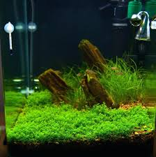 Guide To Aquascaping A Fishy Idea For The Wet Ones Appartment ... Planted Tank Contest Aquarium Design Aquascape Awards How To Create Your First Aquascaping Love Pin By Marius Steenblock On Pinterest The Month September 2008 Pinheiro Manso Creating Nature Part 1 Inspiration A Beginners Guide To Aquaec Tropical Fish Style The Complete Brief Progressive Art Of 2013 Xl Pt2 Youtube Aquadesign Dutch Sytle Aquascape Best Images On Appartment Iwagumi Der Der Firma Dennerle Ist Da Aqua Nano