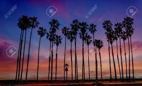Tropical Beach Sunset With Hight Palm Trees Sihouette Near The
