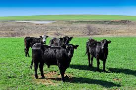 Seven Thousand Acre Oklahoma Beef Farm Goes To Auction April 12th Undisclosed Address Realestatecom 1310 N 10th Duncan Ok Mls 32555 Duncan Oklahoma Homes For Listing 187572 Mitchell Point Rd Waurika 32287 City Oklahomarecently Sold United County Buford 904 16th St For Sale Ryan Trulia Chunky Charms Home Facebook Texas Topographic Maps Perrycastaeda Map Collection Ut Highway 5 573 Realestatecom