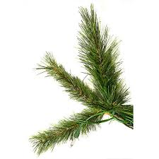 Barcana Christmas Tree For Sale by 7 5 Ft X 57 In Slim Cashmere Fir Barcana