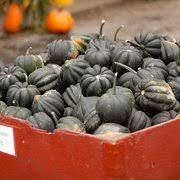 Snohomish County Pumpkin Patches by Bob U0027s Corn U0026 Pumpkin Farm 252 Photos U0026 118 Reviews Pumpkin