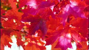 Pumpkin Patch Near Rochester Mn by Pahl U0027s Market Garden Center Produce Landscaping In Apple Valley Mn