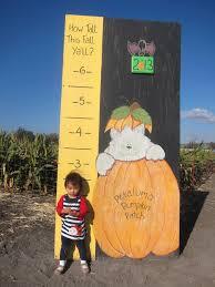 Petaluma Pumpkin Patch Corn Maze Map by Australia Grace Ling Yu