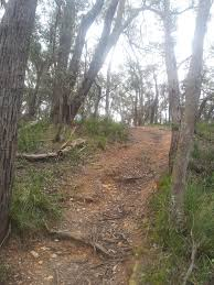 100 Lerderderg State Park Day Out With Dog Victoria Australia My