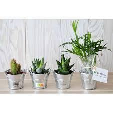 plante d駱olluante bureau plante publicitaire mini plante dépolluante de bureau