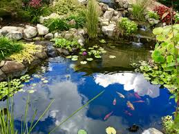 Fish-KOI Pond Builder-Installer-Alpharetta|Johnscreek|Duluth ... Beyonc Shares Stunning Behindthescenes Photos From Her Grammys Aquascape For A Traditional Landscape With Pittsford Ny And Aquascape Patio Ponds Uk 100 Images Pond Superb Pond Build In Dingtown Pa Ce Pontz Sons Contractors The Ultimate Backyard Oasis Inc Choosing The Perfect Water Feature Your Yard Features Aquarium Beautify Home With Unique Designs Certified Waterpaw Patio D R Excavating Landscaping Ponds Waterfalls Waters Edge Aquascaping Waterfalls Accsories