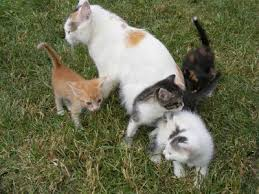 burke animal clinic new kitten acclimation