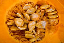 Pumpkin Seeds Testosterone by Benefits Of Squash Seeds Livestrong Com