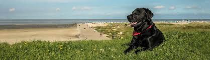 urlaub mit hund in ostfriesland in ferienwohnungen und