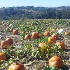 Best Pumpkin Patch Madison Wi by Sutter U0027s Ridge Family Farm Home Facebook
