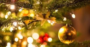 tipps für ihren weihnachtsbaum oh tannenbaum so grünst du