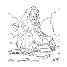 Western Lowland Gorilla Cross River Coloring Page Free Printable