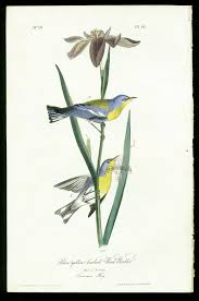Vintage Audubon PrintLove The Color Juxtaposition