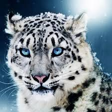 Online Shop White Snow Leopard Diamond Painting Diy Living Room Decor 5D Mosaic Full Embroidery Beast Wall Decoration Animal
