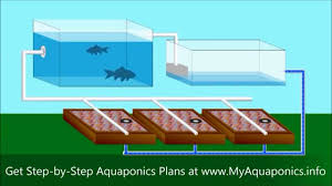 ULTIMATE Backyard Aquaponics Design How To Build An Aquaponic