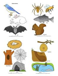 Heres A Large Set Of Pictures Animals And Their Homes Good For Sorting