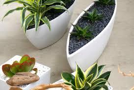 Best Bathroom Pot Plants by Plant Indoor Plants Indoor Plants Suitable For Bathrooms Small