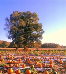 Apple And Pumpkin Picking Maryland by Don U0027t Miss These 14 Pumpkin Patches In Virginia This Fall