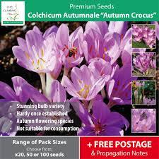 colchicum autumnale autumn crocus seeds meadow saffron bulb