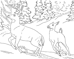 Coloring Pages Of Deer Free Printable For Kids