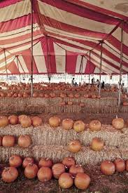 Reeses Pumpkin Patch Topeka Ks by 45 Best Explore Beautiful Frisco Tx Images On Pinterest Texas