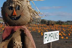 West Sacramento Pumpkin Patch by Photo Essay Incredible Pictures Of Pumpkin Patches
