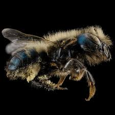 bees unit of 20