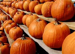 Pumpkin Patch Hayrides Lancaster Pa guide to pumpkin picking in pennsylvania i love halloween