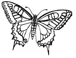 Black Swallowtail Coloring Page 361 Best Immagini Farfalle E Disegni Images
