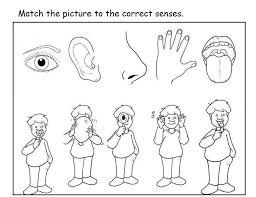 Free 5 Senses Worksheet For Kids