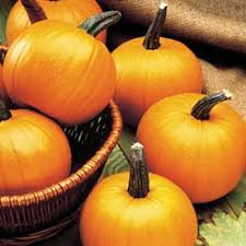 Types Of Pumpkins For Baking by 24 Best Types Of Pumpkins Images On Pinterest Pumpkins Types Of