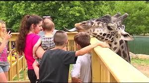 Where Does The Emmaus Halloween Parade Start by Giraffe Feeding Deck Opens At Lehigh Valley Zoo Wfmz