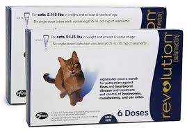flea treatment for cats pet medication revolution for cats and dogs 6 months 34 39