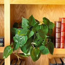 Pot Plants For The Bathroom by Plants That Grow Without Sunlight 17 Best Plants To Grow Indoors