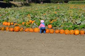 When Does Carmichaels Pumpkin Patch Open by October 2014 U0027muff U0027in Dome