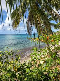 100 Vieques Puerto Rico W Hotel Island Guide Compass Twine