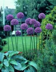 72 best garden flowers images on beautiful flowers