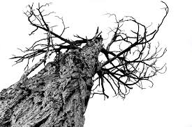 Bed Of Procrustes by At The End Of The Twig Are There Limits To Entanglement Is