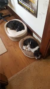 Dog Socks For Hardwood Floors Petco by Fox Valley Humane Association Rehoming Listings