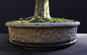 handmade bonsai pots uk 28 images made bonsai pots accents by