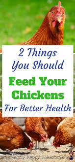 2 Things You Should Feed Your Chickens For Better Health ... Why Should You Compost Chicken Manure Is Naturally High In 1105 Best Backyard Project Images On Pinterest Raising Baby Chick Playground Coops Pet Chickens And Worming Backyard Controversial Here Are Tips How To Naturally Treat Coccidiosis Your Chickens Natural Treatment Of Vent Prolapse Ducks 61 To Me Raising Means Addressing Healthkeeping Deworming Homesteads