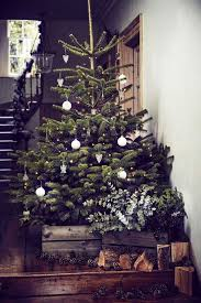 Real Christmas Tree From Wyevale Garden Centres