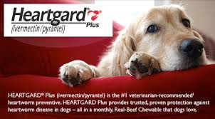 heartgard for cats no prescription heartgard heartgard plus chewables