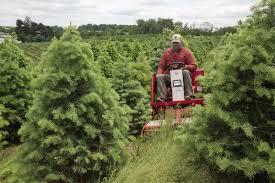 Shells Christmas Tree Farm by Ventrac Brush Mowing