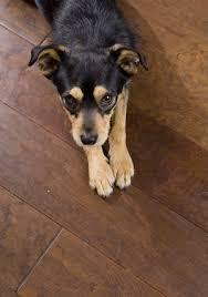 pet peeves preventing and repairing pet damage to hardwood floors