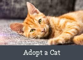 adopt a cat adopt a cat png